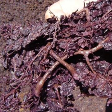 Grape residues