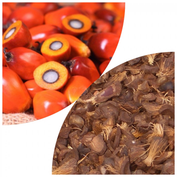 Palm kernel shells (PKS)