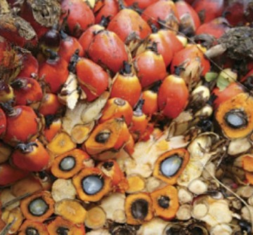 Palm kernel products